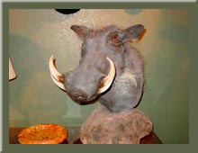 Taxidermy Picture Galleries